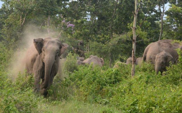 Wild tuskers keep villagers on edge in West Karbi Anglong